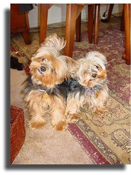 Denise Purrington's Dogs Sadie and Monty